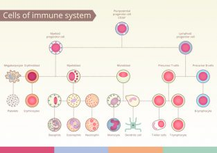 Origin of Cells of immune system. Medical benefit, the study of immunology. Vector design elements.